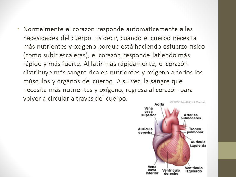 Normalmente el corazón responde automáticamente a las necesidades del cuerpo.