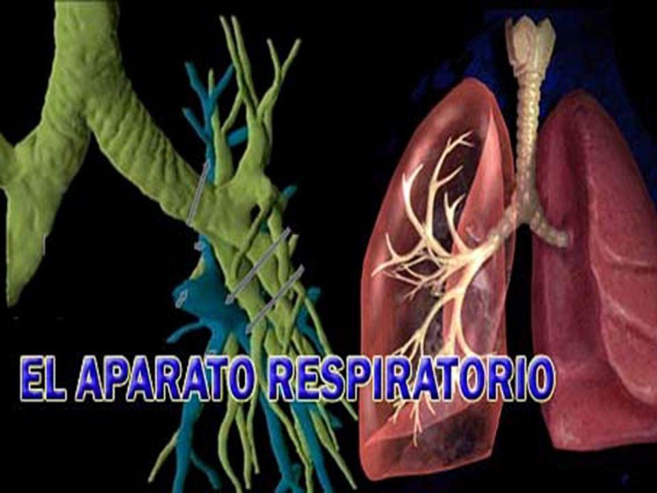 ¿ Por que respiramos.¿Sabías que a lo mejor respiras más o menos 50 millones de veces en tu vida.