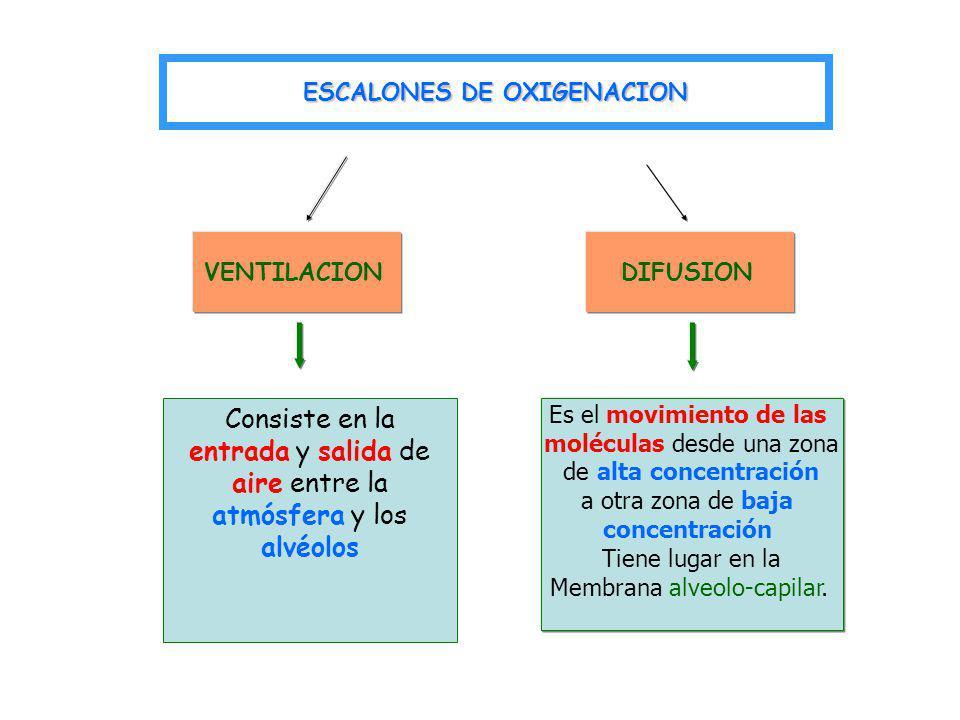 VENTILACIONDIFUSION Es el movimiento de las moléculas desde una zona de alta concentración a otra zona de baja concentración Tiene lugar en la Membran