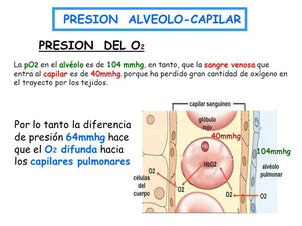 2 La pO 2 en el alvéolo es de 104 mmhg, en tanto, que la sangre venosa que entra al capilar es de 40mmhg. porque ha perdido gran cantidad de oxígeno e