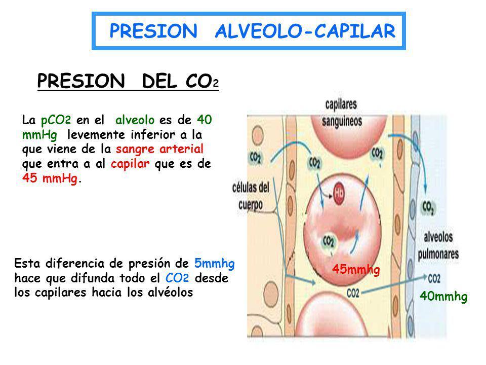 La pCO 2 en el alveolo es de 40 mmHg levemente inferior a la que viene de la sangre arterial que entra a al capilar que es de 45 mmHg. PRESION DEL CO
