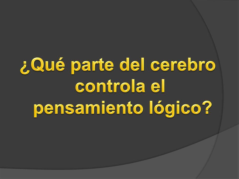 a)El lóbulo occipital b)La corteza cerebral c) El sistema límbico