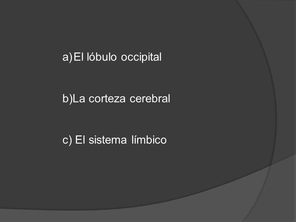 b) La corteza cerebral La corteza controla todo lo que es realidad, teniendo como filtro a la hipófisis y de ahí se desvía el impulso, si es visual, hacia el lóbulo occipital, si es del habla, hacia el área de broca, y así cada uno de los impulsos van a la corteza, dándonos un razonamiento lógico, especialmente del lado izquierdo de nuestro cerebro.
