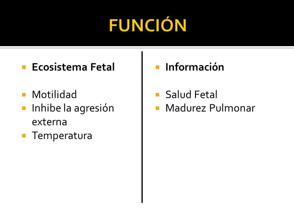 Ecosistema Fetal Motilidad Inhibe la agresión externa Temperatura Información Salud Fetal Madurez Pulmonar