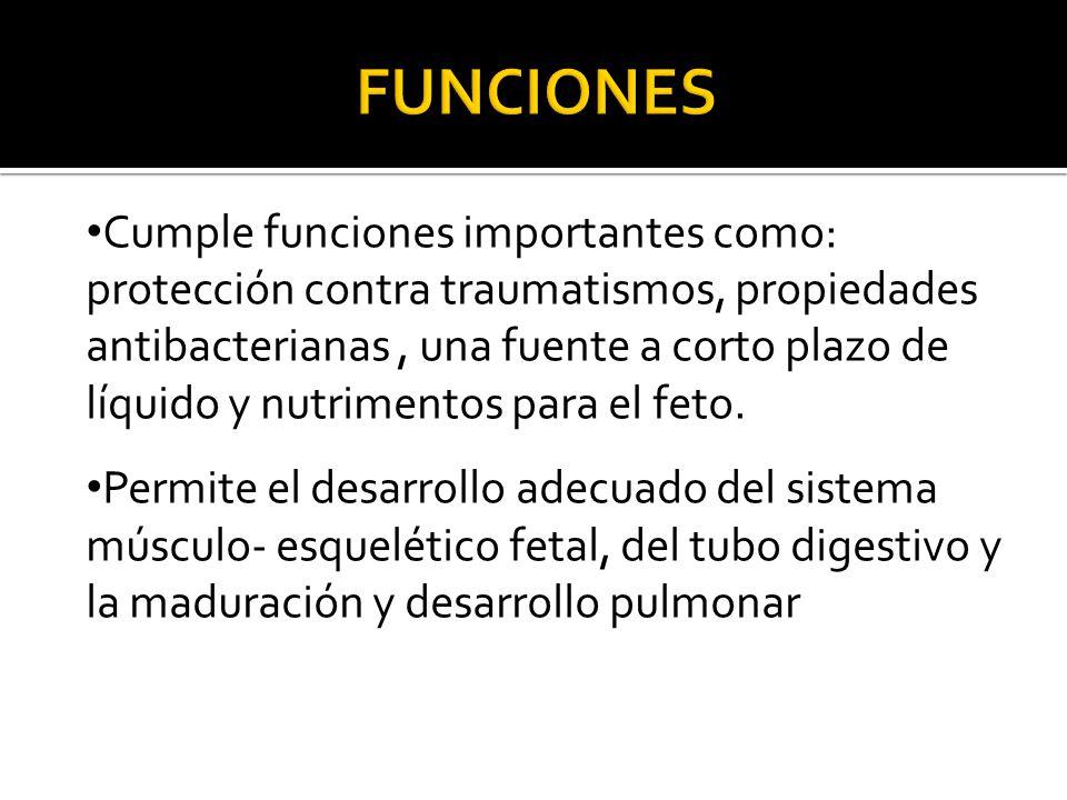 Cumple funciones importantes como: protección contra traumatismos, propiedades antibacterianas, una fuente a corto plazo de líquido y nutrimentos para el feto.