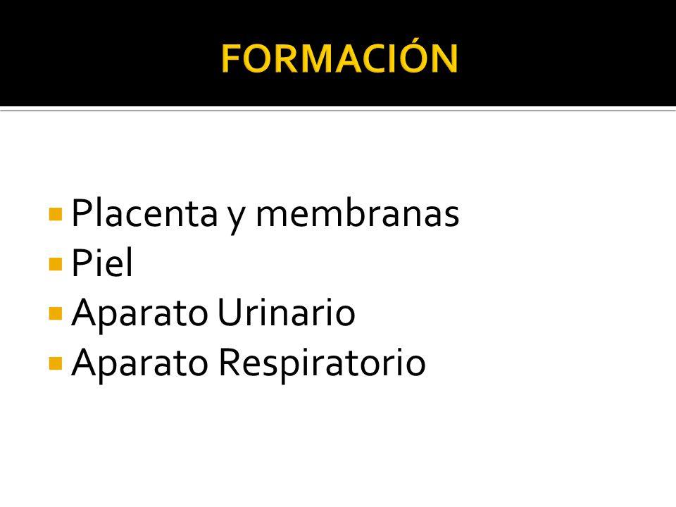 Placenta y membranas Piel Aparato Urinario Aparato Respiratorio