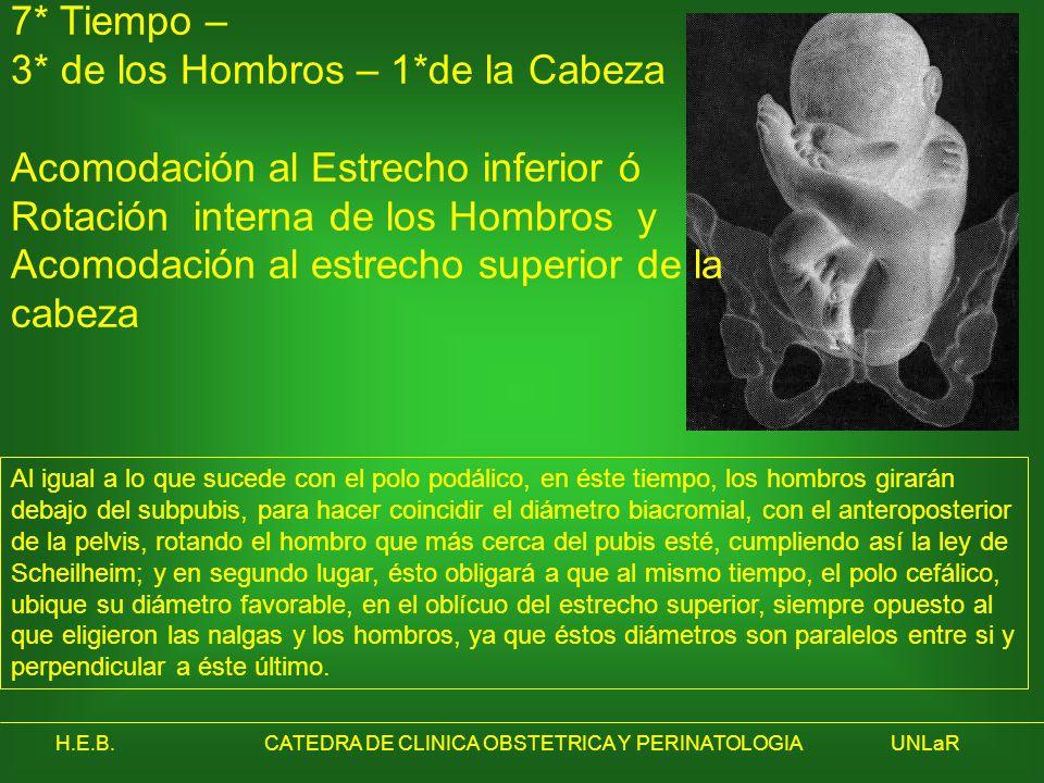 H.E.B.CATEDRA DE CLINICA OBSTETRICA Y PERINATOLOGIAUNLaR 7* Tiempo – 3* de los Hombros – 1*de la Cabeza Acomodación al Estrecho inferior ó Rotación in