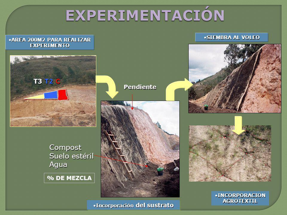 AREA 200M2 PARA REALIZAR EXPERIMENTOAREA 200M2 PARA REALIZAR EXPERIMENTO Incorporación del sustratoIncorporación del sustrato Pendiente Compost Suelo estéril Agua % DE MEZCLA T3 T2 C SIEMBRA AL VOLEOSIEMBRA AL VOLEO INCORPORACION AGROTEXTILINCORPORACION AGROTEXTIL