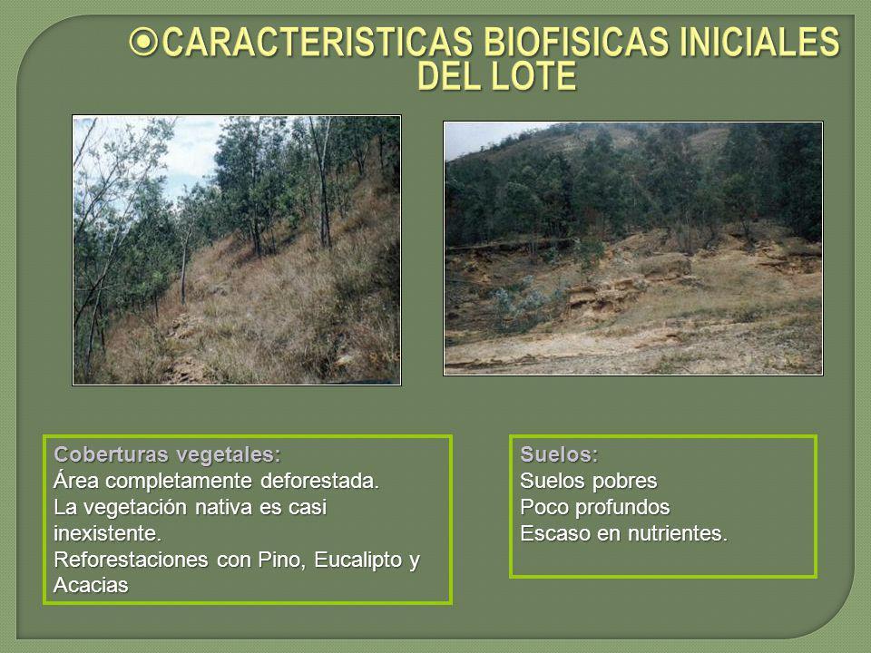 CARACTERISTICAS BIOFISICAS INICIALES DEL LOTE CARACTERISTICAS BIOFISICAS INICIALES DEL LOTE Coberturas vegetales: Área completamente deforestada. La v