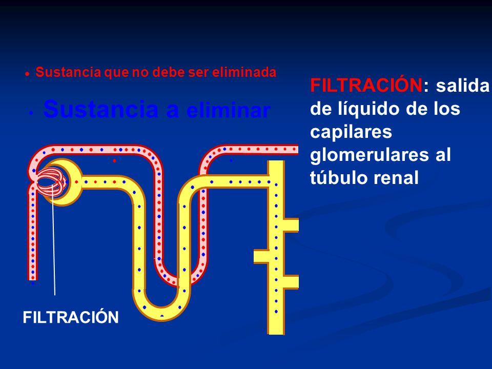 FILTRACIÓN: salida de líquido de los capilares glomerulares al túbulo renal FILTRACIÓN Sustancia a eliminar Sustancia que no debe ser eliminada