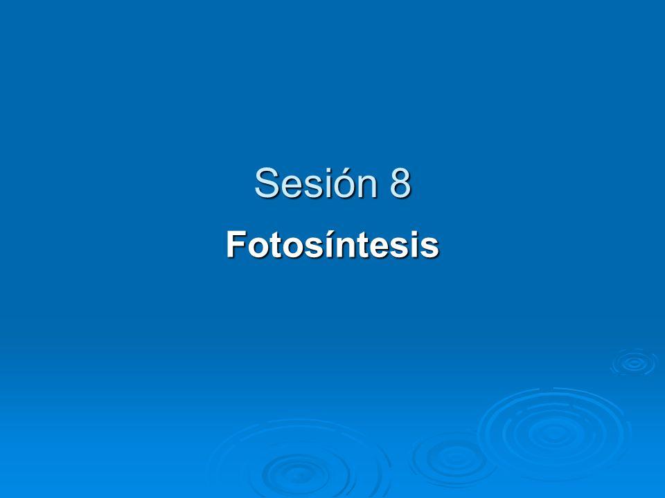 Factores que influyen la fotosíntesis 1.1. Intensidad luminosa 2.