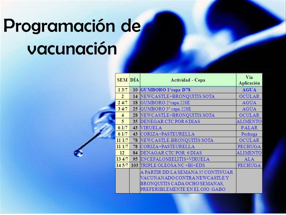 Programación de vacunación SEMDÍAActividad - Cepa Vía Aplicación 1 3/7 10GUMBORO 1°cepa D78AGUA 2 14NEWCASTLE+BRONQUITIS SOTAOCULAR 2 4/7 18GUMBORO 2°