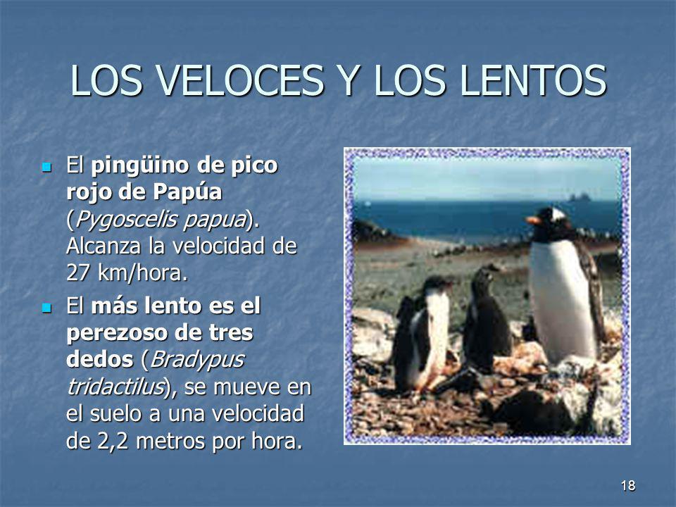 18 LOS VELOCES Y LOS LENTOS El pingüino de pico rojo de Papúa (Pygoscelis papua). Alcanza la velocidad de 27 km/hora. El más lento es el perezoso de t
