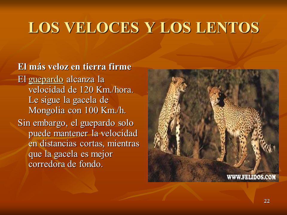 22 LOS VELOCES Y LOS LENTOS El más veloz en tierra firme El guepardo alcanza la velocidad de 120 Km./hora. Le sigue la gacela de Mongolia con 100 Km./