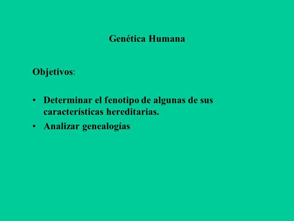 Genética Humana Objetivos: Determinar el fenotipo de algunas de sus características hereditarias. Analizar genealogías
