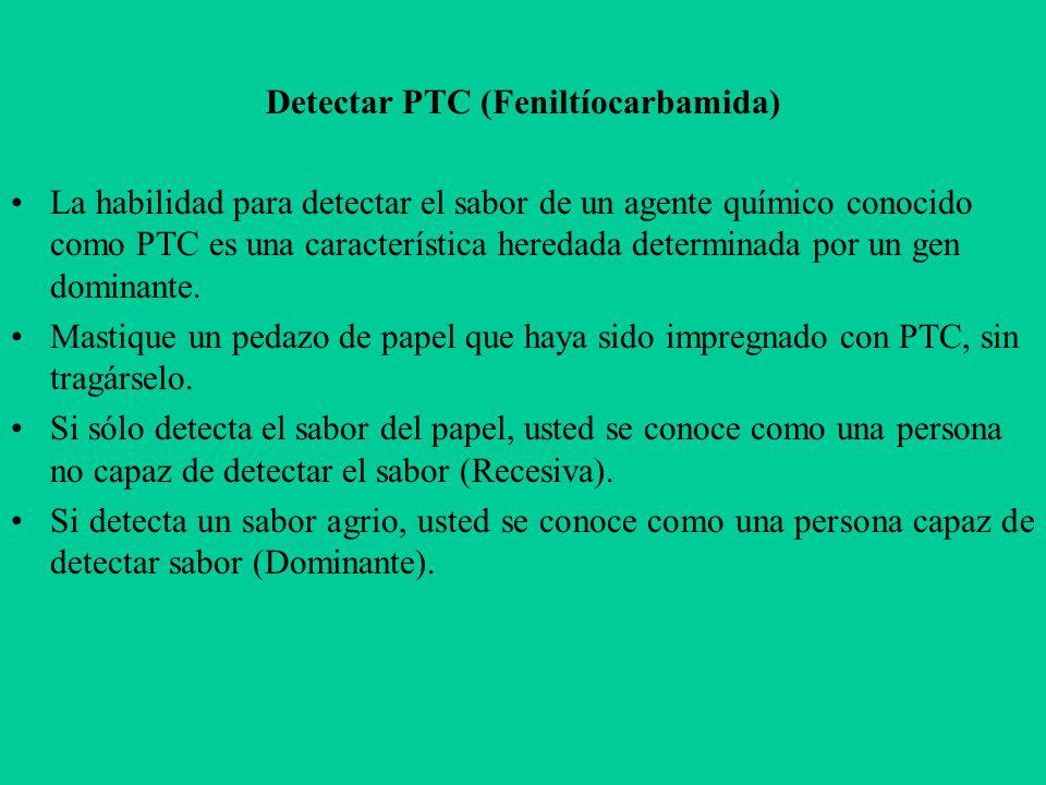 Detectar PTC (Feniltíocarbamida) La habilidad para detectar el sabor de un agente químico conocido como PTC es una característica heredada determinada