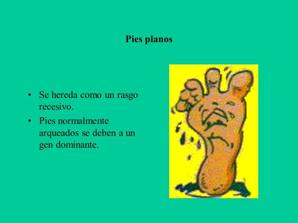 Pies planos Se hereda como un rasgo recesivo. Pies normalmente arqueados se deben a un gen dominante.