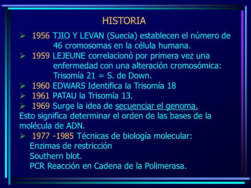 HISTORIA 1956 TJIO Y LEVAN (Suecia) establecen el número de 46 cromosomas en la célula humana. 1959 LEJEUNE correlacionó por primera vez una enfermeda