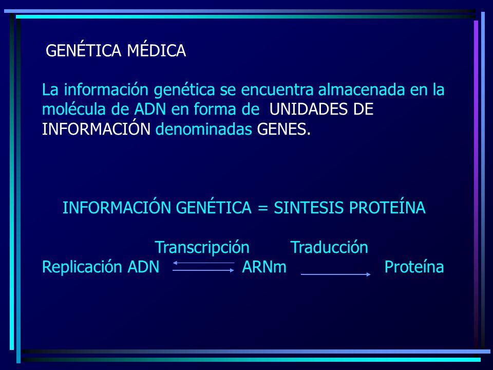 GENÉTICA MÉDICA La información genética se encuentra almacenada en la molécula de ADN en forma de UNIDADES DE INFORMACIÓN denominadas GENES. INFORMACI