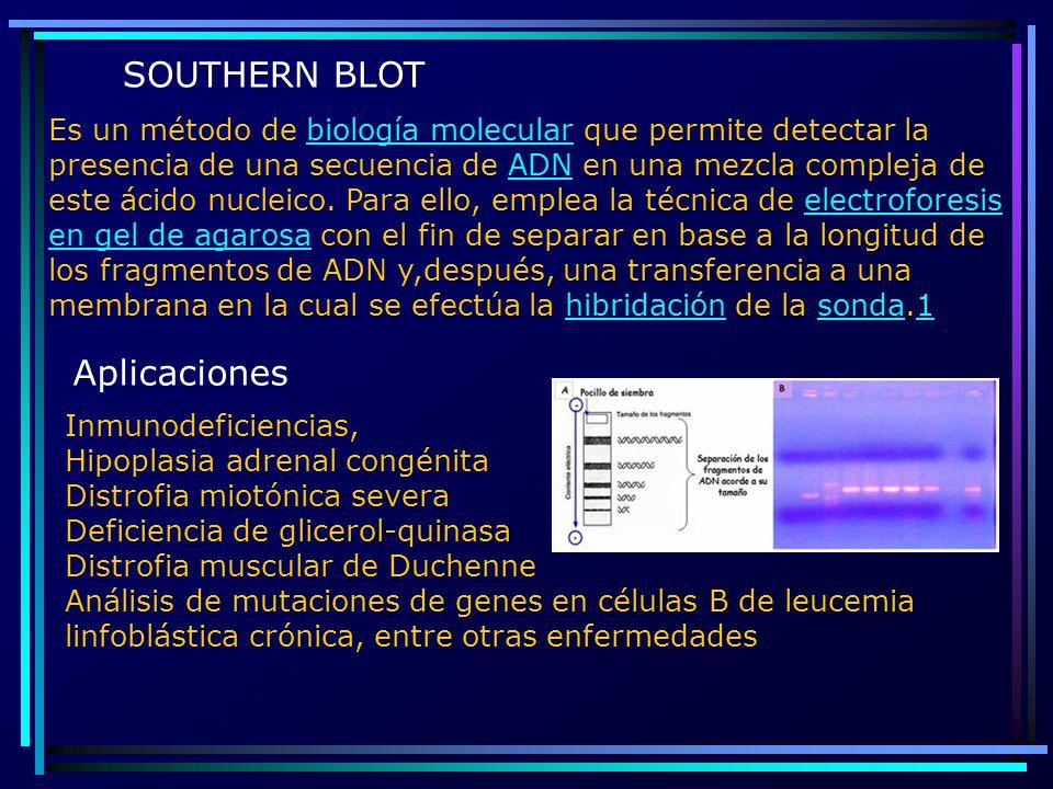 Es un método de biología molecular que permite detectar la presencia de una secuencia de ADN en una mezcla compleja de este ácido nucleico. Para ello,
