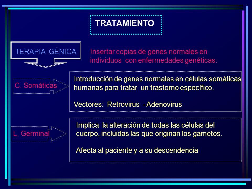 TRATAMIENTO TERAPIA GÉNICA Insertar copias de genes normales en individuos con enfermedades genéticas. C. Somáticas Introducción de genes normales en
