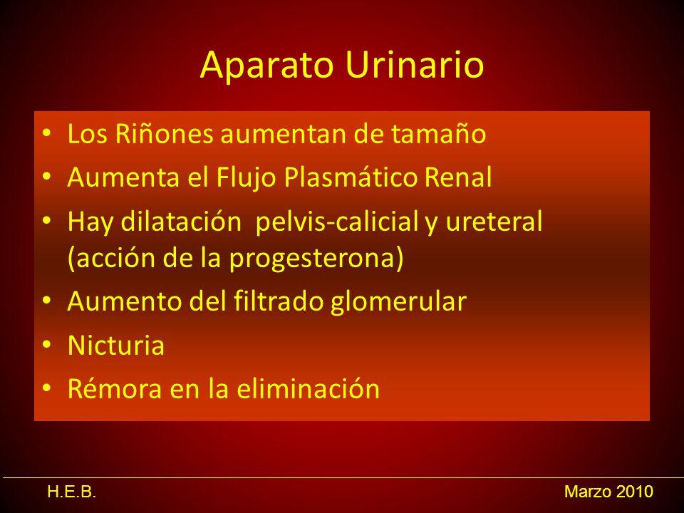 H.E.B.Marzo 2010 Aparato Urinario Los Riñones aumentan de tamaño Aumenta el Flujo Plasmático Renal Hay dilatación pelvis-calicial y ureteral (acción d
