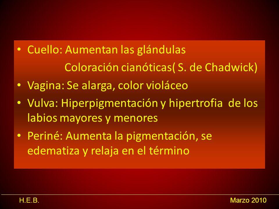 H.E.B.Marzo 2010 Cuello: Aumentan las glándulas Coloración cianóticas( S. de Chadwick) Vagina: Se alarga, color violáceo Vulva: Hiperpigmentación y hi