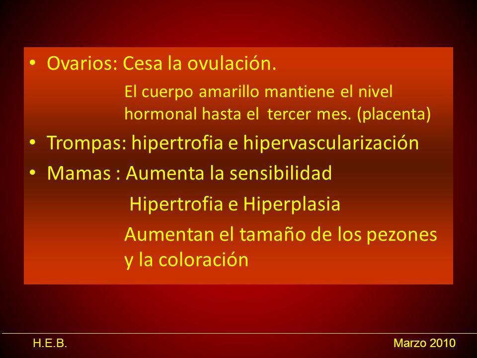 H.E.B.Marzo 2010 Ovarios: Cesa la ovulación. El cuerpo amarillo mantiene el nivel hormonal hasta el tercer mes. (placenta) Trompas: hipertrofia e hipe