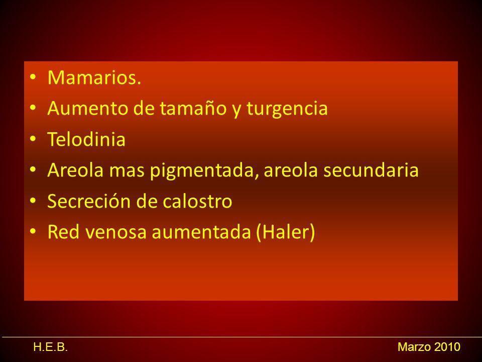 H.E.B.Marzo 2010 Mamarios. Aumento de tamaño y turgencia Telodinia Areola mas pigmentada, areola secundaria Secreción de calostro Red venosa aumentada