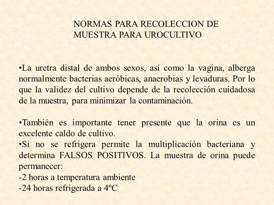 NORMAS PARA RECOLECCION DE MUESTRA PARA UROCULTIVO La uretra distal de ambos sexos, así como la vagina, alberga normalmente bacterias aeróbicas, anaer