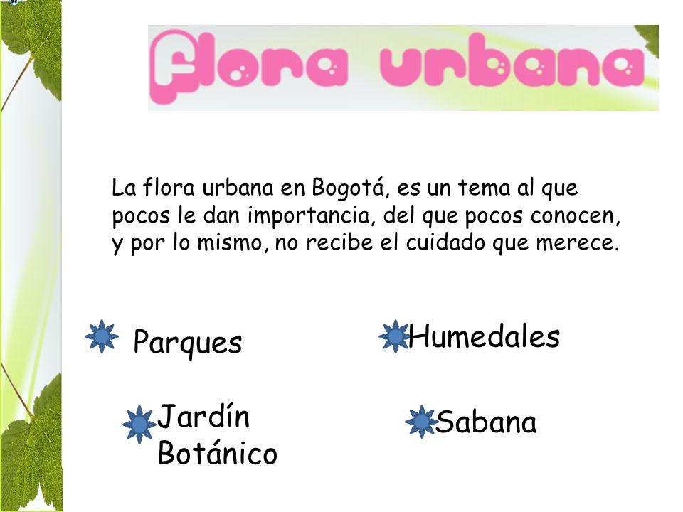 La flora urbana en Bogotá, es un tema al que pocos le dan importancia, del que pocos conocen, y por lo mismo, no recibe el cuidado que merece.