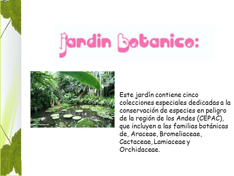 Este jardín contiene cinco colecciones especiales dedicadas a la conservación de especies en peligro de la región de los Andes (CEPAC), que incluyen a las familias botánicas de, Araceae, Bromeliaceae, Cactaceae, Lamiaceae y Orchidaceae.