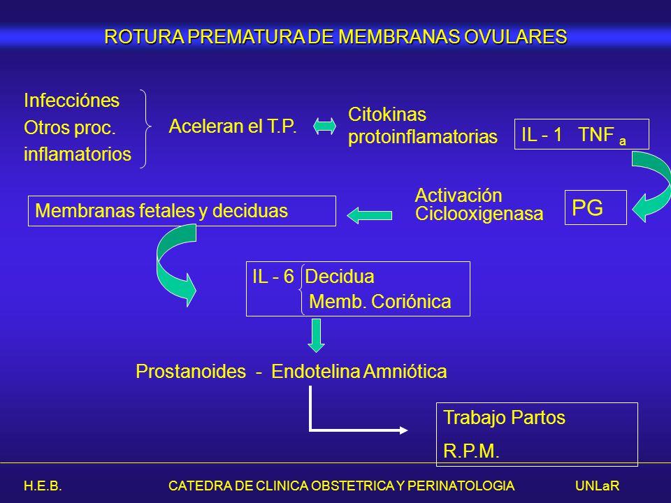 H.E.B. CATEDRA DE CLINICA OBSTETRICA Y PERINATOLOGIA UNLaR Citokinas protoinflamatorias IL - 1 TNF a Infecciónes Otros proc. inflamatorios Aceleran el