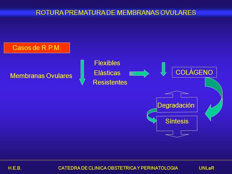 H.E.B. CATEDRA DE CLINICA OBSTETRICA Y PERINATOLOGIA UNLaR Membranas Ovulares Flexibles Elásticas Resistentes COLÁGENO Degradación Síntesis Casos de R