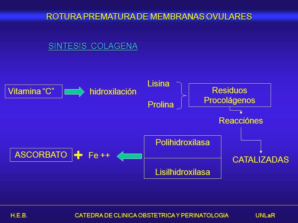 H.E.B. CATEDRA DE CLINICA OBSTETRICA Y PERINATOLOGIA UNLaR SINTESIS COLAGENA Vitamina C hidroxilación Prolina Lisina Residuos Procolágenos Polihidroxi