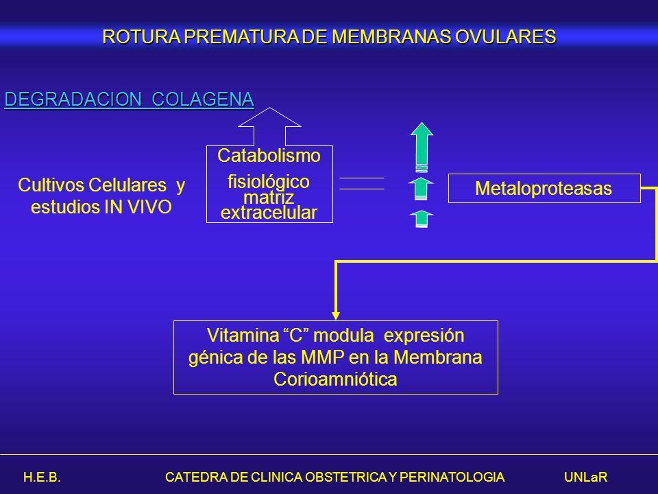 H.E.B. CATEDRA DE CLINICA OBSTETRICA Y PERINATOLOGIA UNLaR DEGRADACION COLAGENA Cultivos Celulares y estudios IN VIVO Catabolismo fisiológico matriz e