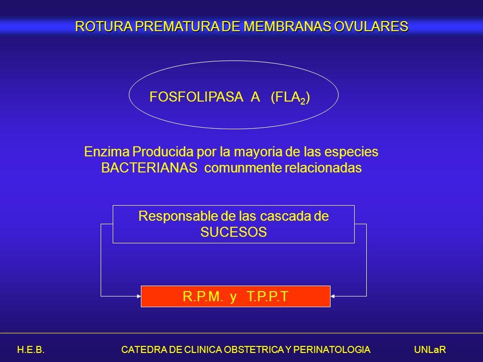 H.E.B. CATEDRA DE CLINICA OBSTETRICA Y PERINATOLOGIA UNLaR Enzima Producida por la mayoria de las especies BACTERIANAS comunmente relacionadas Respons