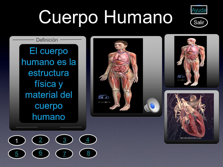 Cuerpo Humano El cuerpo humano es la estructura física y material del cuerpo humano Definición Ayuda Salir 2 1 4 3 6 5 7 8