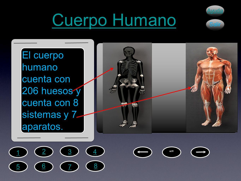 Cuerpo Humano El cuerpo humano cuenta con 206 huesos y cuenta con 8 sistemas y 7 aparatos. Ayuda Salir 2 1 43 6 5 7 8