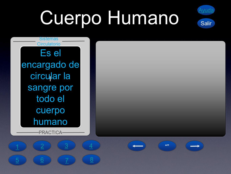 Cuerpo Humano Es el encargado de circular la sangre por todo el cuerpo humano Sistemas Circulatorio PRACTICA Ayuda Salir l 1 4 6 5 7 8 2 3