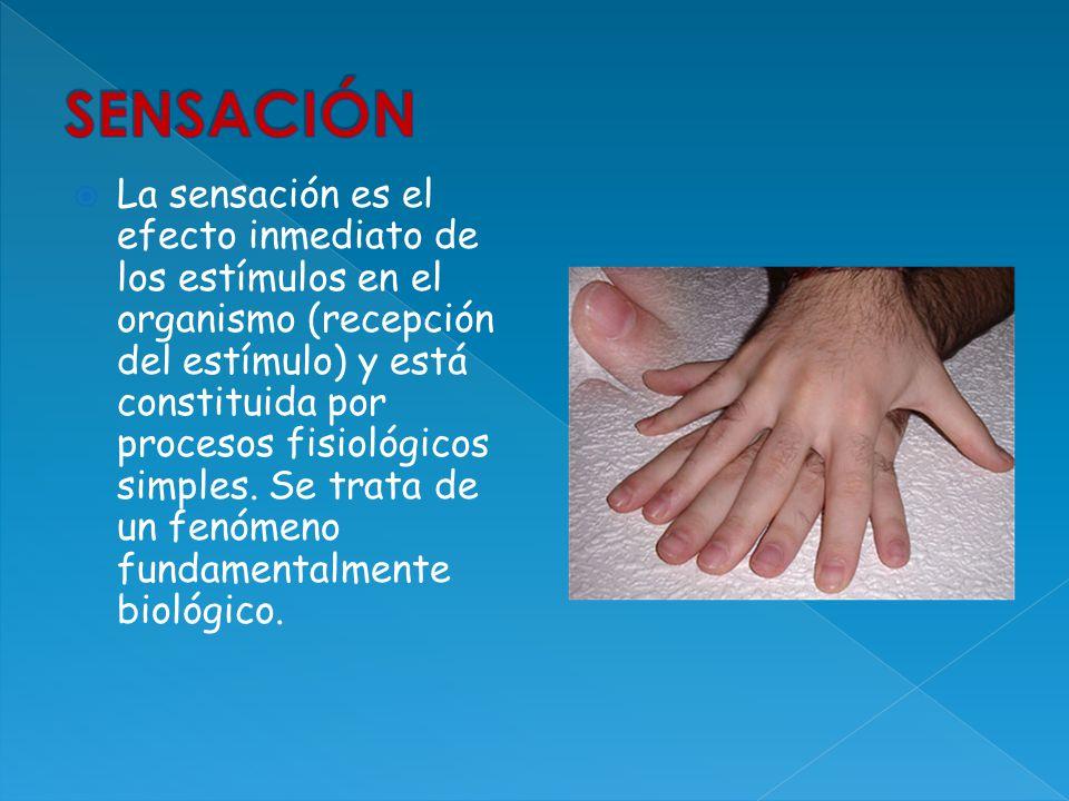 La sensación es el efecto inmediato de los estímulos en el organismo (recepción del estímulo) y está constituida por procesos fisiológicos simples. Se