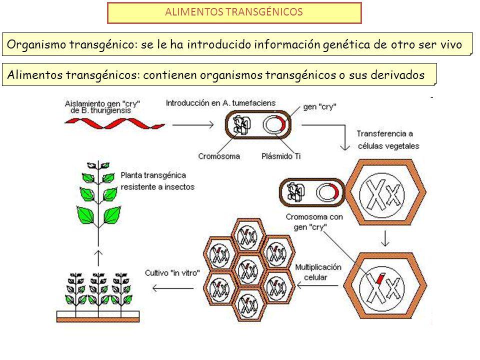 ALIMENTOS TRANSGÉNICOS Organismo transgénico: se le ha introducido información genética de otro ser vivoAlimentos transgénicos: contienen organismos transgénicos o sus derivados