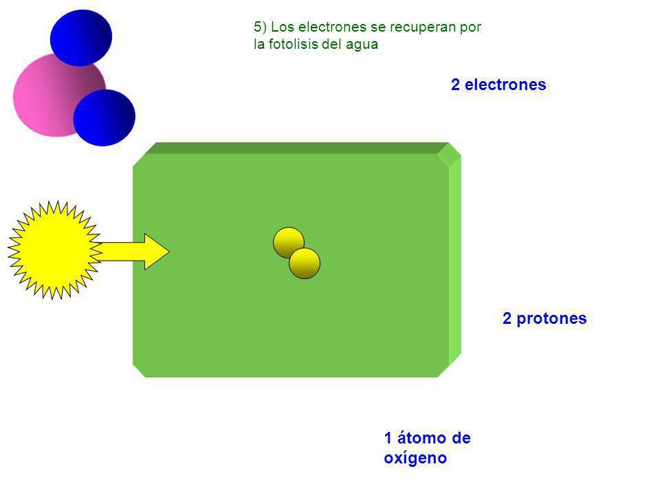 2 electrones 2 protones 1 átomo de oxígeno 5) Los electrones se recuperan por la fotolisis del agua
