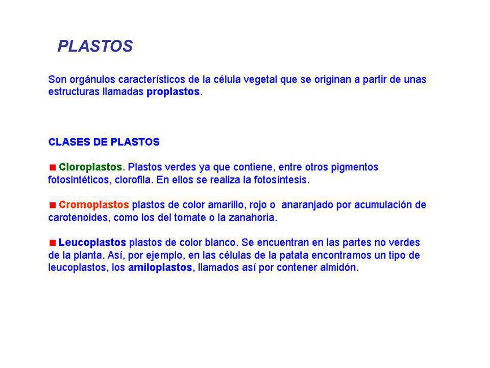 PLASTOS