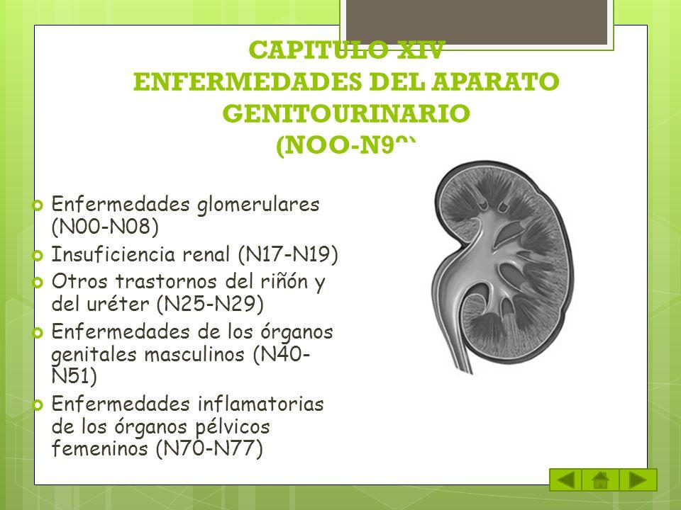 CAPITULO XIV ENFERMEDADES DEL APARATO GENITOURINARIO (NOO-N99) Enfermedades glomerulares (N00-N08) Insuficiencia renal (N17-N19) Otros trastornos del