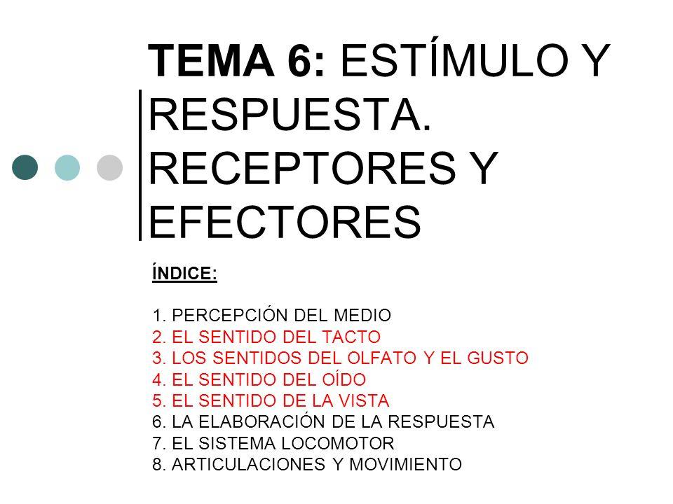 TEMA 6: ESTÍMULO Y RESPUESTA. RECEPTORES Y EFECTORES ÍNDICE: 1. PERCEPCIÓN DEL MEDIO 2. EL SENTIDO DEL TACTO 3. LOS SENTIDOS DEL OLFATO Y EL GUSTO 4.