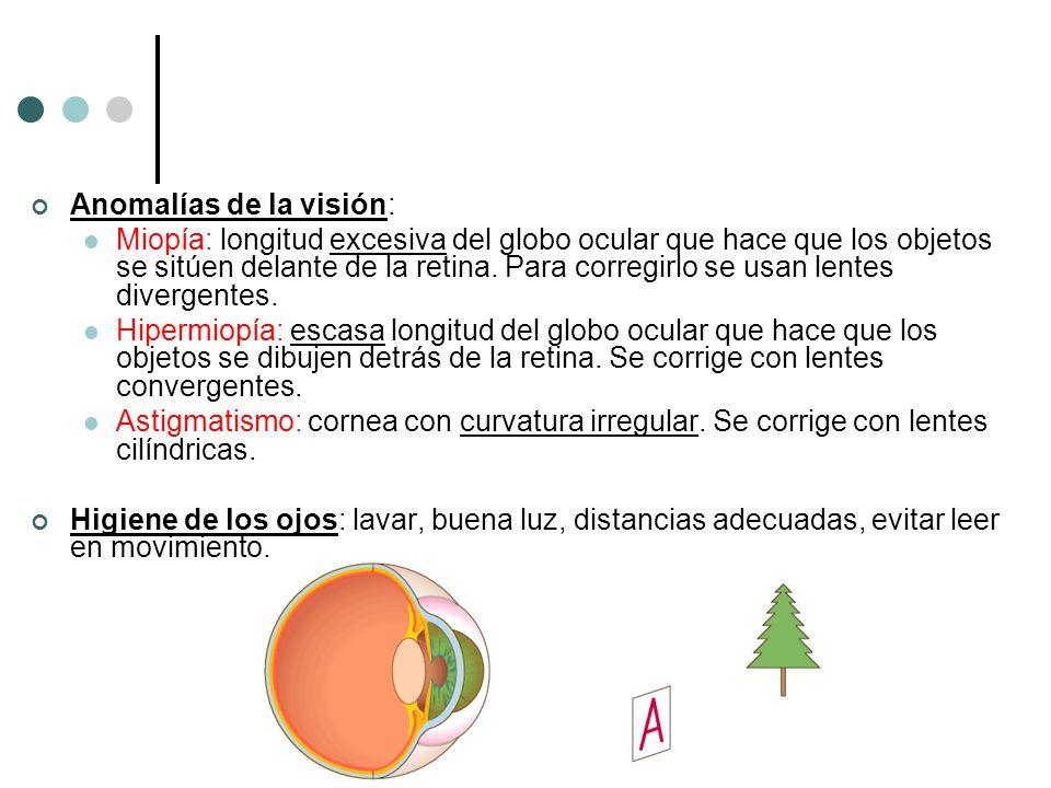 Anomalías de la visión: Miopía: longitud excesiva del globo ocular que hace que los objetos se sitúen delante de la retina. Para corregirlo se usan le