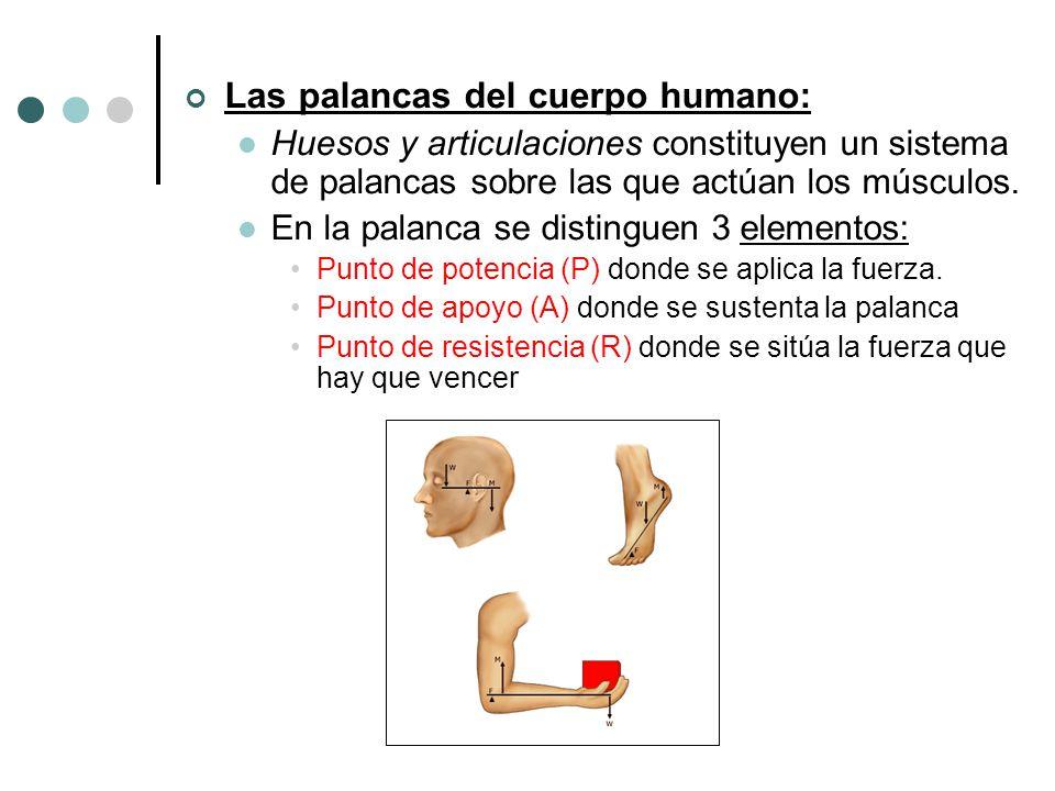 Las palancas del cuerpo humano: Huesos y articulaciones constituyen un sistema de palancas sobre las que actúan los músculos. En la palanca se disting