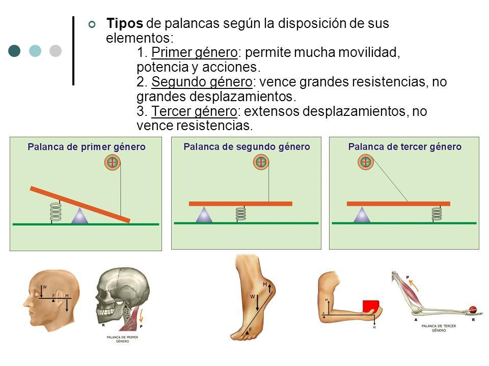 Tipos de palancas según la disposición de sus elementos: 1. Primer género: permite mucha movilidad, potencia y acciones. 2. Segundo género: vence gran