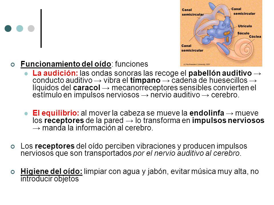 Funcionamiento del oído: funciones La audición: las ondas sonoras las recoge el pabellón auditivo conducto auditivo vibra el tímpano cadena de hueseci